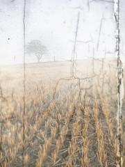 Misty field (MB3142) Tags: landscape field harvest lonetree tree scene tex texture fog crack old