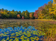More Fall Colors Along Lake Superior *Explore* (Catskills Photography) Tags: landscape lake reflections trees fall autumn lilypads leaves canong15 sullivancounty