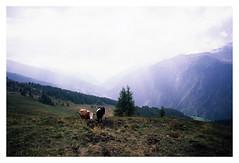 huhu, guck ma (fluffisch) Tags: fluffisch heiligenblut krnten austria alps hohetauern carlzeiss biogon21mm zeissbiogon21mmf28 wide g21 g2 35mm negativ rangefinder messucher analog contaxg2 slide dia fujichrome fuji velvia50