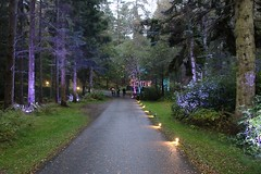 2016 - 14.10.16 Enchanted Forest - Pitlochry (11) (marie137) Tags: enchanted forest pitlochry mobrie137 scotland lights music people water reflection trees shows food fire drink pit patter shapes art abstract night sky tour family walk path bells smoke disco balls unusual whisperer bridge wood colour fun sculpture day amazing spectacular must see landscape faskally shimmer town