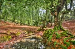 Hayedo de Otzarreta - II (Julin Martn Jimeno) Tags: hayedo vizcaya paisvasco hdr bosque nikon d7000 2016 espaa otzarreta hayedodeotzarreta high dynamic range highdynamicrange