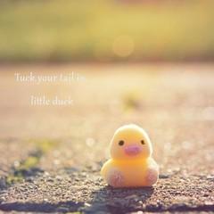 Just a little duck (tjoepsel) Tags: sun duck macro hunger games