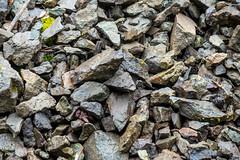 DSCF4291 (LEo Spizzirri) Tags: bevin morgan peter odin huck huckleberry shug cabin northwest seattle forest pacific mushroom moss josh betsy ladder green thick