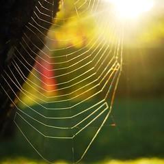 Sunrise (Rosmarie Wirz) Tags: sunrise cobweb colors beauty nature smallthings
