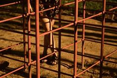 pedacitos (Leticia Manosso) Tags: ruive redhead girl cute sweet playground delicate sensitive