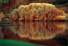 2016 10 16 Rhein Jungle  Lorch IR - 12 (Mister-Mastro) Tags: 720nmfilter infrared ir lorch rhein jungle brain colors reflection reflexion reflektion spiegelung