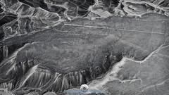 Hummingbird (Stephen Ball Photography) Tags: nazca nazcalines nazcaculture peru peruvian southamerica ancient historical historic geoglyph art aerial travel travelphotography blackandwhite bw canon canon5dmkiii5d canoneos5dmarkiii canon24105mm wwwstephenballphotocom stephenballphotography stephenball stephenballphoto