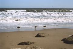 """Come to me. I'll lift you up, above the rising seas."" (Joe Palacios) Tags: ocean sea film beach water 35mm sand minolta god jesus scan bible 102 srt rokkor"