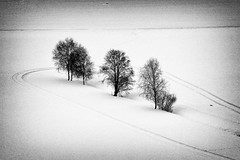 Spuren im Schnee (mikiitaly) Tags: bw italy photography for gallery natur recreation südtirol altoadige saariysqualitypictures bestcapturesaoi elitegalleryaoi ruby5 ruby15 elementsorganizer11 ruby20 rubyfrontpage bwgalleryphotographyforrecreation