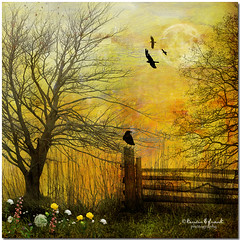 .. in the pasture .. (Kerstin Frank art) Tags: flowers trees sky bird fence fantasy pasture kerstinfrankart kerstinfranktexture
