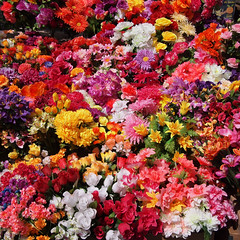 Sea of Every Possible Flower (tarmo888) Tags: flower 6x6 square europe ukraine olympuspen kiev kyiv  lill  puhkus vacationtravel   ukrayina photoimage sooc kiyev geosetter mytracks  epl1  hh020 lumixg20mm geotaggedphoto mistokyyiv foto year2013