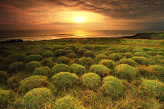 A THOUSAND GRASS BALLS (ManButur PHOTOGRAPHY) Tags: sunset sky bali cloud sun grass clouds canon indonesia landscape photography eos golden scenery exposure explorer vivid explore filter 7d dslr filters efs 1022mm hitech threes eastasia canonefs1022mmf3545usm gnd f3545 goldenhours sillhuet canon7d easasia manbutur manbuturphotography