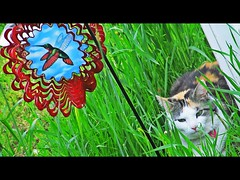 peek-a-boo (stansvisions) Tags: red reflection cute green colors grass cat catchycolors fun outdoors virginia fly us funny unique peekaboo greeneyes reflect daydreamer unlimitedphotos stansvisions ourdailychallengegroup2