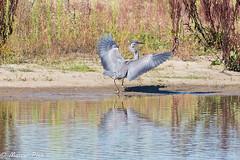 Grenspark de zoom-kalmthout (CapMarcel) Tags: kalmthout de zoom nederland belgie natuur nature reserve