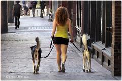 Morning Walk. (Louis Shum) Tags: vancouver walk girl dogs morning olympus omd em5 street bc art artistic doglover littledoglaughedstories