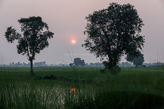 0W6A7163-2 (Liaqat Ali Vance) Tags: sunset nature google liaqat ali vance photography punjab pakistan gujranwala trees