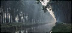 Canal in morning mist (Eric@focus) Tags: mist damme nevel canal kanaal belgium greatphotographers nikon d7100 travel flanders 1000v40f greenscene innamoramento