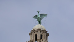 Liver Bird (lcfcian1) Tags: royal liver building royalliverbuilding liverpool architecture tower liverbird bird