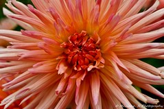 Jardin des plantes de Lille ( Nord France ) (Mziane R. Photography) Tags: france jardin des plantes couleur t flowers paysages