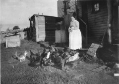 Woman feeding hens - Bemboka, NSW, c1928 (State Library of New South Wales collection) Tags: statelibraryofnewsouthwales