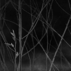 (zventure, off until late September) Tags: noiretblanc nb bordsduvar bw blackandwhite bois buissons monochrome alpesmaritimes abstrait abstract aube arbres carr cach dawn extrieur fil fort fleuve feuilles flore fleuvecotier gris herbes hiver lignes
