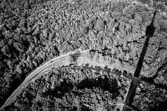 Von oben (AxelN) Tags: shadow deutschland street germany junction wald sw fernsehturm badenwrttemberg silhouette kreuzung schatten stuttgart schwarzweis schattenriss road strase trees blackandwhite bw televisiontower