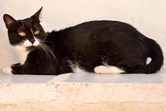 Gata Gitana (2) (adopcionesfelinasvalencia) Tags: gata gitana
