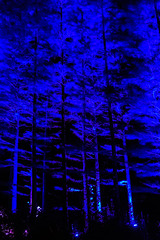 MushRmFest_591 (Lance Rogers) Tags: camera kennettsquare pa longwoodgardens nightscape nikond500 pennsylvania people places lancerogersphotoscom lancerogers
