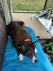 Seat hog (What I saw...) Tags: clachan sands beach outer hebrides north uist molly border collie dog toyota hiace campervan