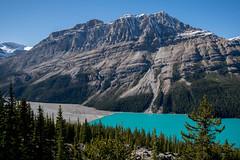 Banff 87 (4brownies) Tags: banff alberta canada 2016 vacation peyto lake