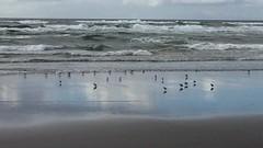 IMG_4021 (mbnyland) Tags: gerrit sarah nana bob max henry ocean meg joe bill long beach