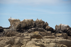 Birds. On The Rocks. (toschi) Tags: islesofscilly england cornwall uk stagnes