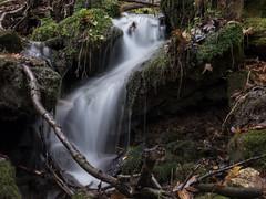 P1150135 (TallGrass-IA) Tags: edgewood iowa unitedstates us panasonic g6 1235 lumix micro43 microfourthirds waterfalls longexposure hiking outdoor nature moss