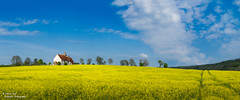 Church in Yellow and Blue (trevager) Tags: bluesky brightpixphotography church copyrighttrevorager field hill idsworth landscape panoramic rapeseed sthubert yellow