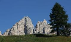 Orizzonte (lincerosso) Tags: dolomiti montagne mountainscape orizzonte crinale alberotree abeterosso piceaabies passogardena bellezza armonia luce estate