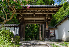 Bamboo Grove Entrance (mtfernandes.01) Tags: bamboo grove forest tree trees entrance gate kyoto japan