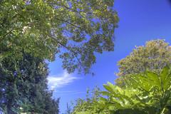 From my garden (ArtGordon1) Tags: garden e17 walthamstow london england september 2016 trees summer sun davegordon davidgordon daveartgordon davidagordon daveagordon artgordon1