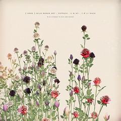 [ keke ] wild roses ([ keke ] by Kean Kelly) Tags: sl secondlife keke lostfound originalmesh wild roses galore