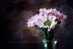 Tiny Flowers {with textures} (DefinitelyDreaming) Tags: flowers tiny tinyflowers daisy artistic painterly painterlyflowers floral stilllife sonya99