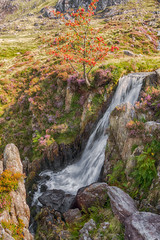 Tumbling down (Lee~Harris) Tags: water waterfall rugged rocks flowers snowdonia wales uk outdoor motion watercourse stream river growth landscape serene geology creek flowingwater beautiful colours nature