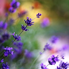 garden colors (SS) Tags: ss pentax k5 spring 2016 colors garden lazio italy squareformat perspective flower depthoffield plant light smcpentaxm50mmf17 bokeh outdoor blossom bright serene landscape field