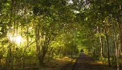 A walk in the woods, October 2016 (DavidTWilcock) Tags: elven lotr ethereal autumnal sunlight forest woods trees uk england surrey autumn
