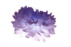 blume (mkniebes) Tags: flower glow lila abstract highkey closeup inverted