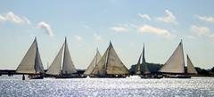 Six Skipjacks by Linda Walls (AccessDNR) Tags: 2016 photocontest fall autumn scenery sceniclandscape sailboats choptankriver cambridge