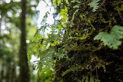 Waipuoa Forest-5