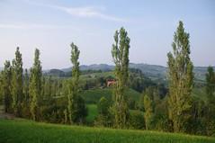 Im steirischen Rebenland ( eulenbilder - berti ) Tags: steiermark sdsteiermark sdsteirischeweinstrase herbst 2016 wein trauben landschaft hgel