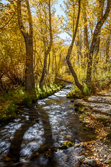 And It Was All Yellow (Jeffrey Sullivan) Tags: fallcolorsmonocountyeastern sierrasierra nevadalee vifall colors mono county easternsierra sierranevada leevining california united states usa landscape nature photography canon eos 6d photo copyright 2016 jeff sullivan october