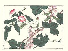 Japanese bindweed and hyacinth bean (Japanese Flower and Bird Art) Tags: flower bindweed calystegia japonica convolvulaceae hyacinth bean dolichos lablab fabaceae hoitsu sakai kiitsu suzuki kimei nakano nihonga woodblock picture book japan japanese art readercollection