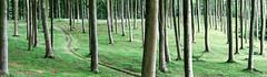 Himmelstorp, Kullen, July 2, 2016 (Ulf Bodin) Tags: wood canoneos5dmarkiii bokskog sverige beech path forest canonef100400mmf4556lisiiusm himmelstorp sweden outdoor skne kullen summer bok skne skneln se landscape
