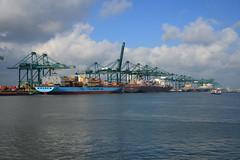 2016 10 17 MPET Terminal DST_9977 (larry_antwerp) Tags: mpet maersk msc mediterraneanshipping psa container terminal antwerp antwerpen       port        belgium belgi          schip ship vessel